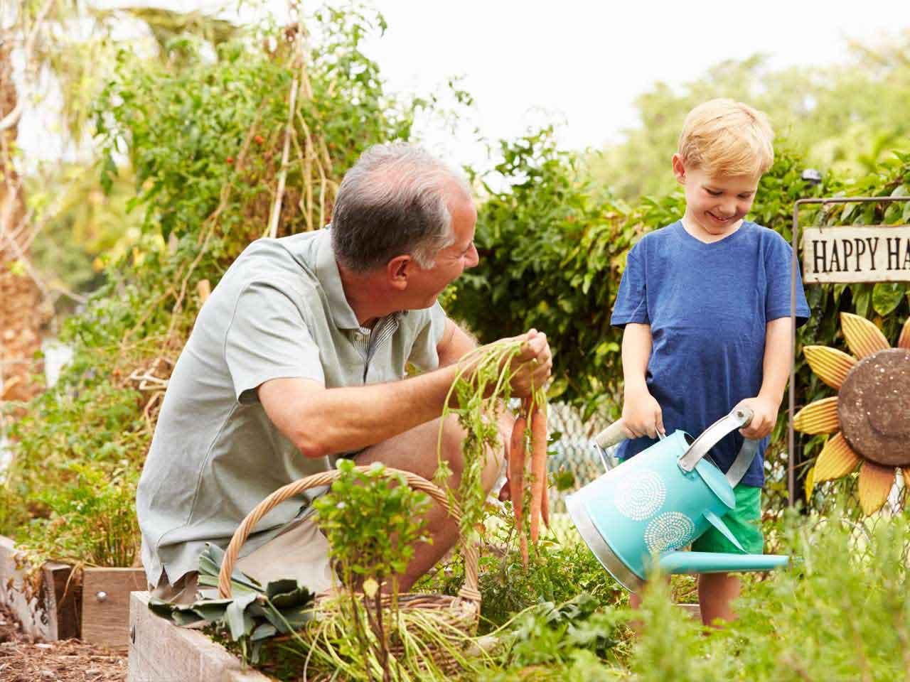 Create a vegetable patch for children