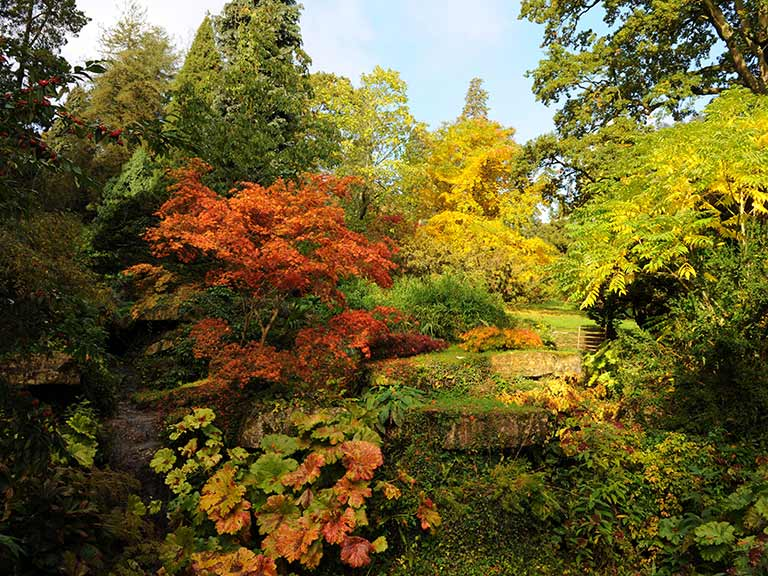 Batsford Arboretum in autumn