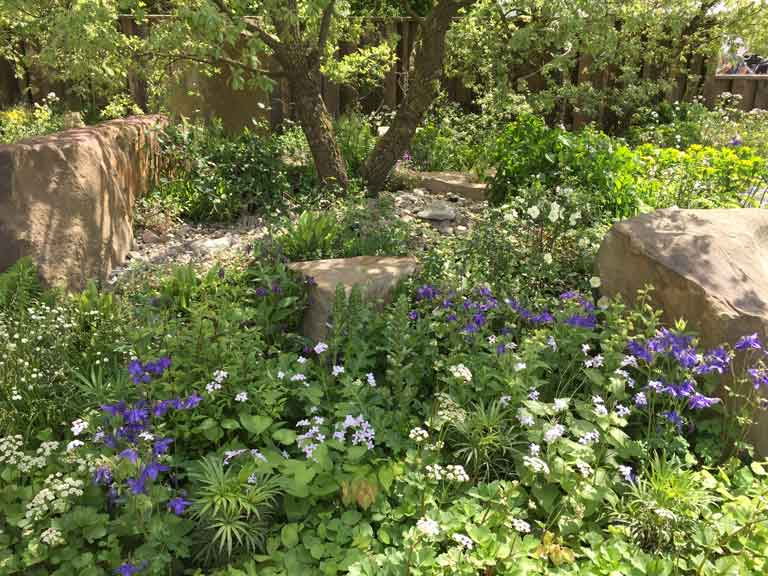 chelsea flower show, Cleve West's woodland planting