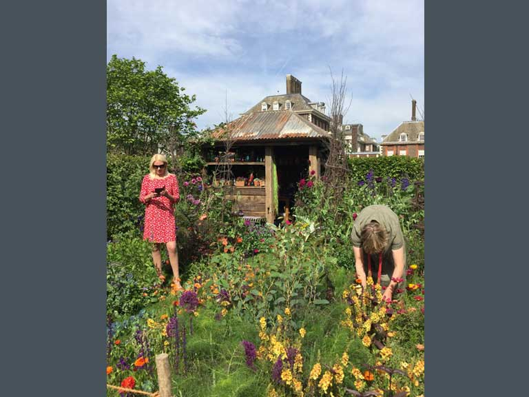 The Anneka Rice Colour Cutting Garden by Sarah Raven