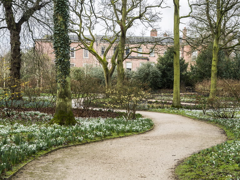 Snowdrops at Dunham Massey