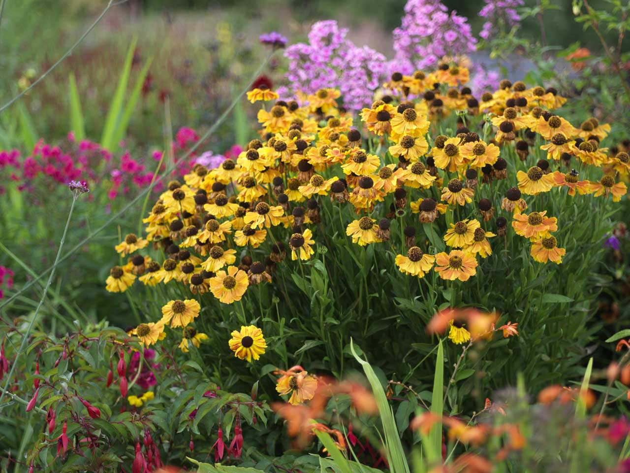 top ten flowers for an autumn border - saga