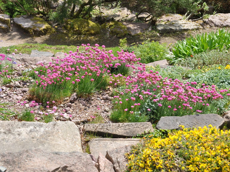 Rockeries Are Ideal For Sunny Well Drained Slopes
