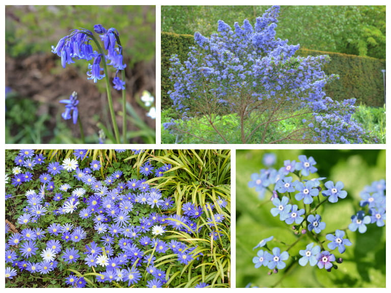 Blue Flowers For Your Garden Saga
