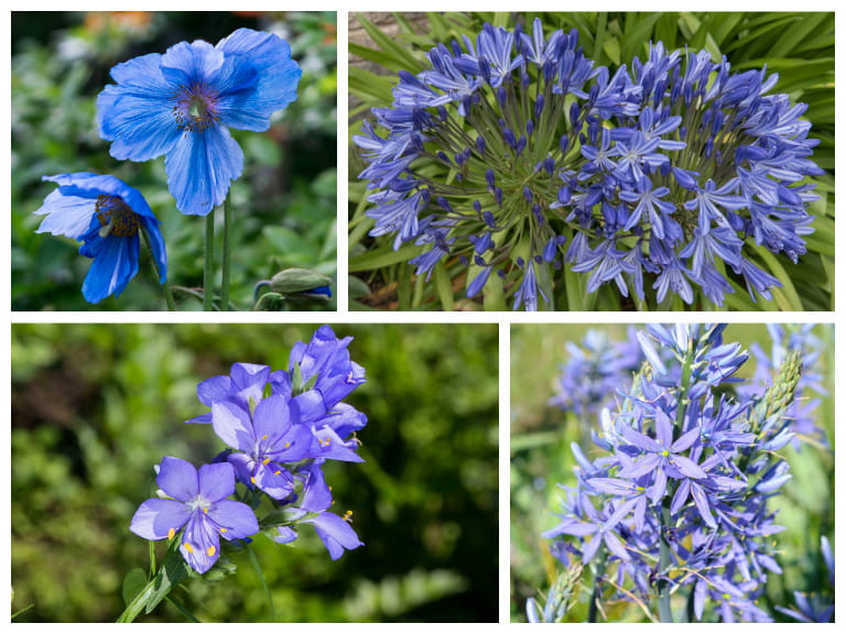 Blue flowers for your garden saga summer flowering blue flowers mightylinksfo