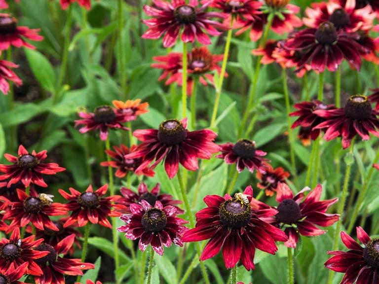 Creating A Cutting Garden Saga