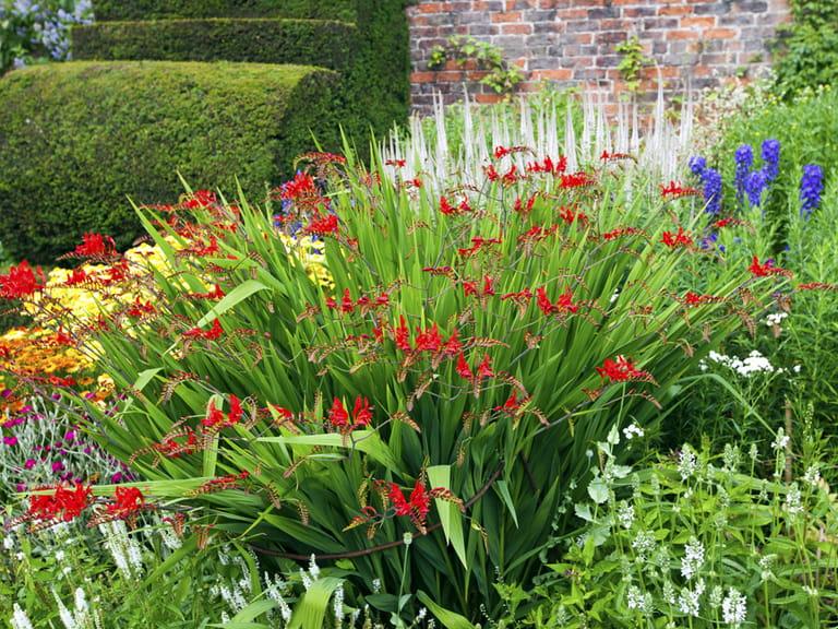 How to design and plant a herbaceous border saga for Garden border plant designs