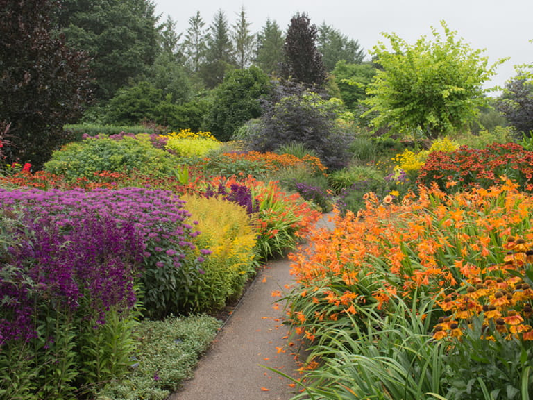 How to design and plant a herbaceous border saga for How to layout plants in a garden