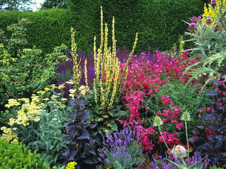 How To Design And Plant A Herbaceous Border Saga