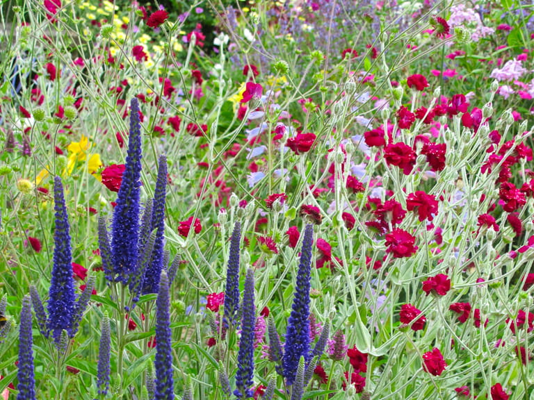 Val Bourne's summer border