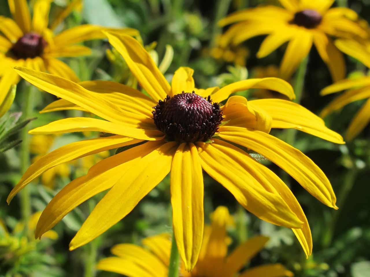 Seed Heads Deadheading Post Bloom Care Saga