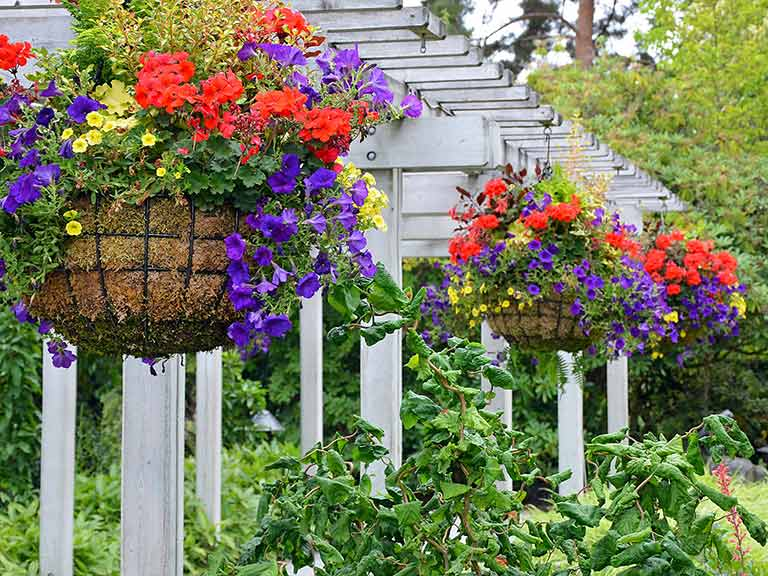 Growing Hanging Flower Baskets : How to plant up hanging baskets saga