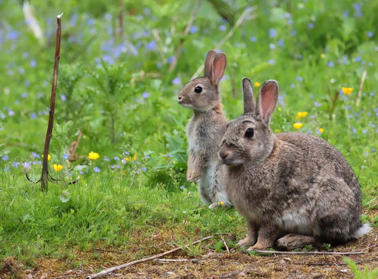 How To Stop Birds Rabbits Eating Young Plants Saga
