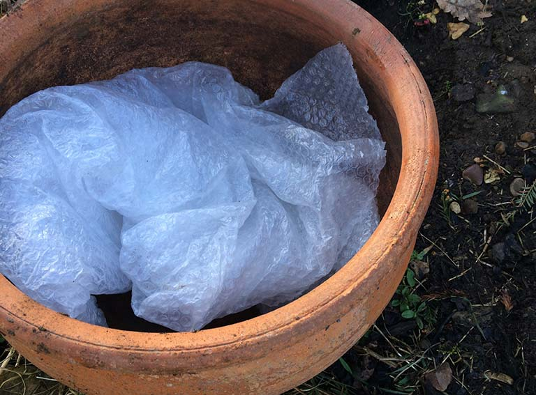 Forcing a rhubarb pot with bubblewrap