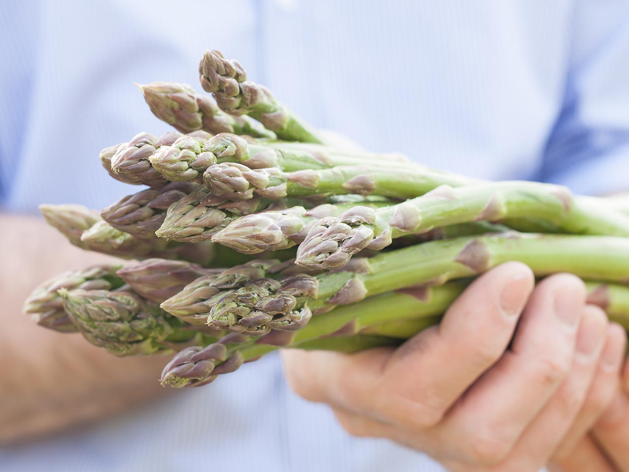 how to grow and harvest asparagus