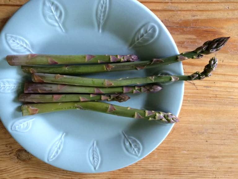 Asparagus harvested from the Sheep Garden