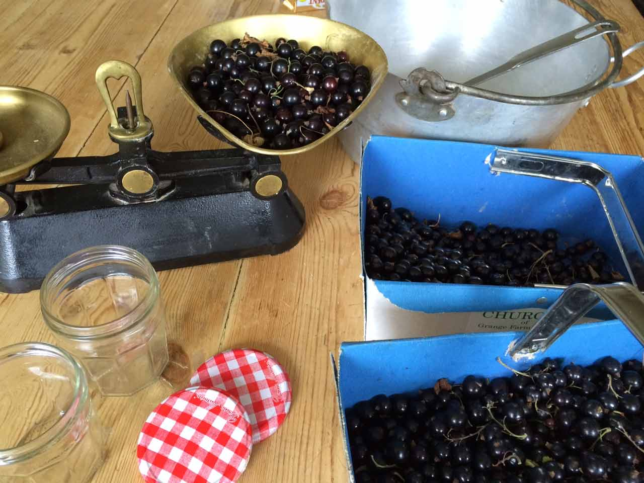 A bumper crop of blackcurrants ready for turning into jam