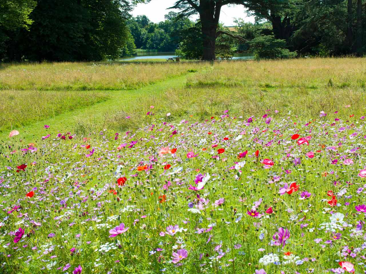 Dan Pearson's wildflower meadow at Compton Verney