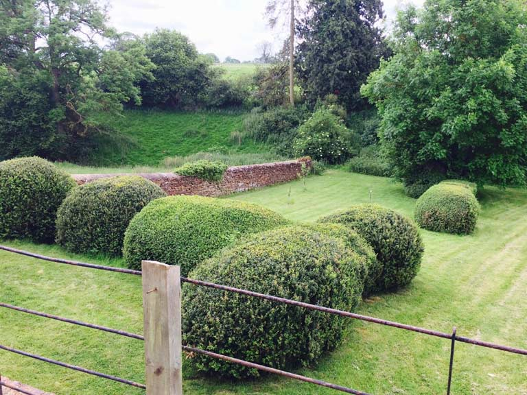 The Sheep Garden hedges, ripe for some creative cloud pruning