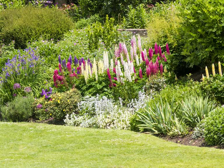 Top tips and ideas for a better garden border saga for Ideas for garden borders designs