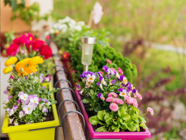 Gardening ideas for balconies, patios & courtyards - Saga