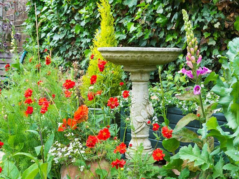Creating a wildlife garden courtyards small gardens saga for Creating a courtyard garden