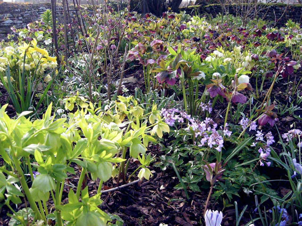 How to design and plant a woodland garden saga for A small garden