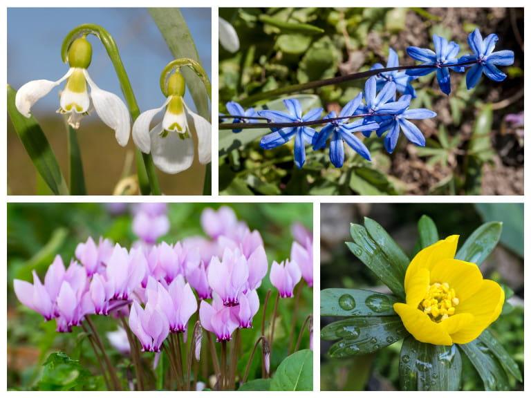 How to design and plant a woodland garden saga woodland garden plants woodland patch spring flowering bulbs mightylinksfo