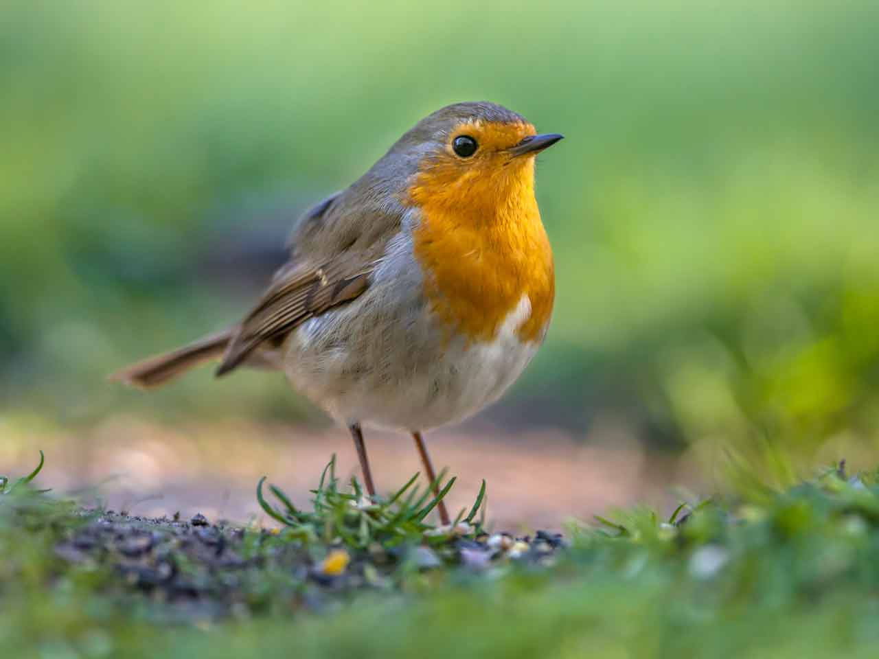 Six steps to creating a wildlife friendly garden Saga