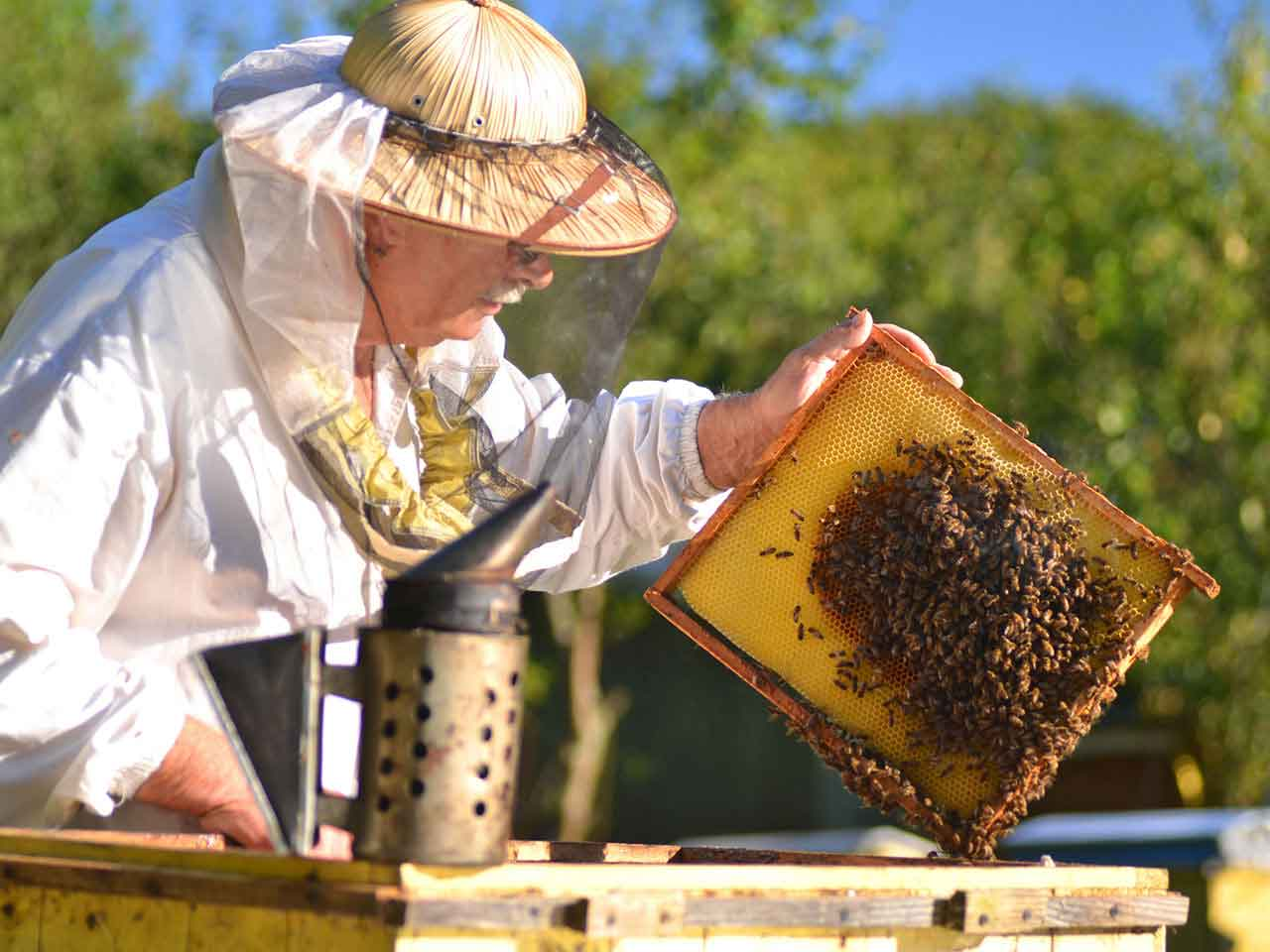 Senior man beekeeping