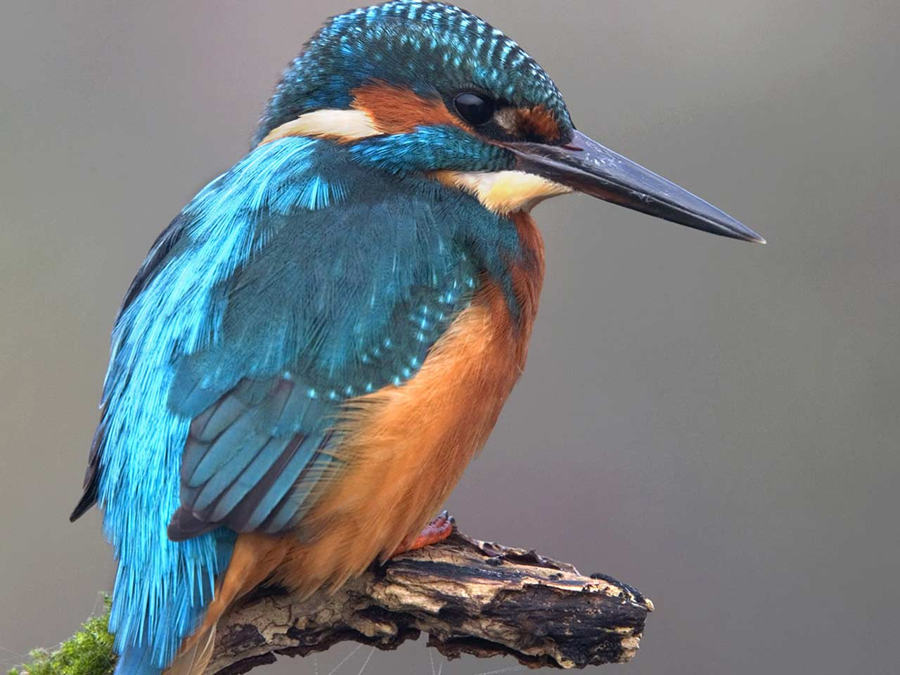what is the poem is it the kingfisher all about