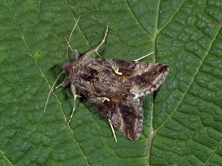 How are butterflies and moths related?