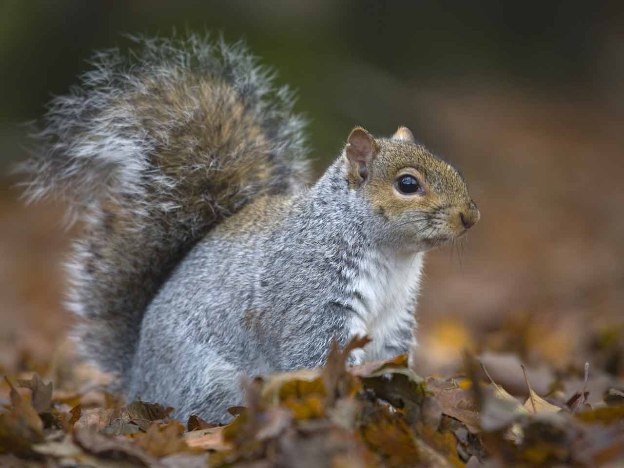 foamy the squirrel dating advice Neurotically yours dating advice posted on 26112017 26112017 by bragami but we doctors have formulated the secret dosage which gives an erection for a time period suitable to the patient.