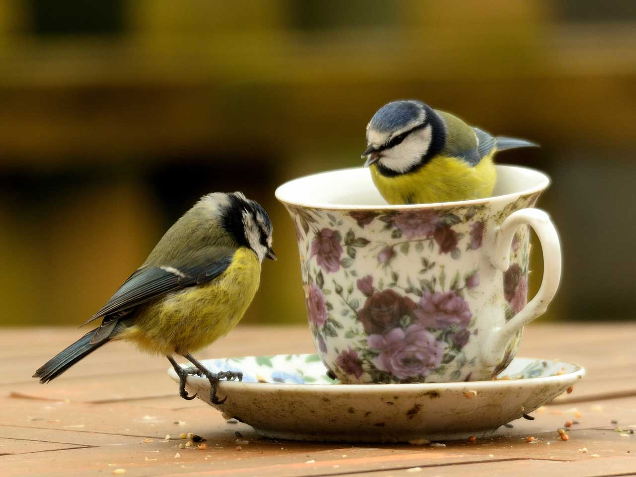 Encourage wild birds to feed in the garden