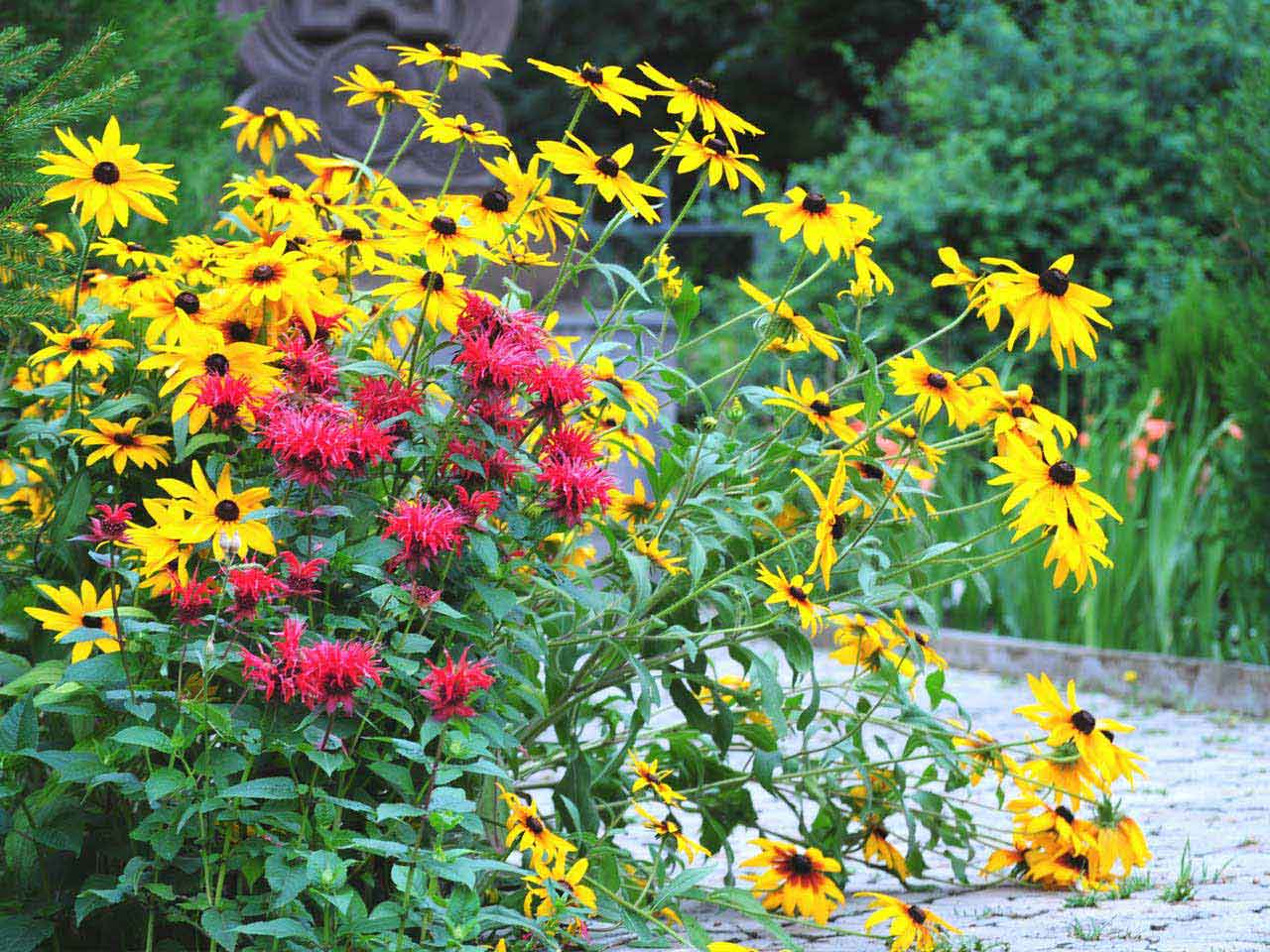 Monarda and rudbeckia both grow well on clay soil
