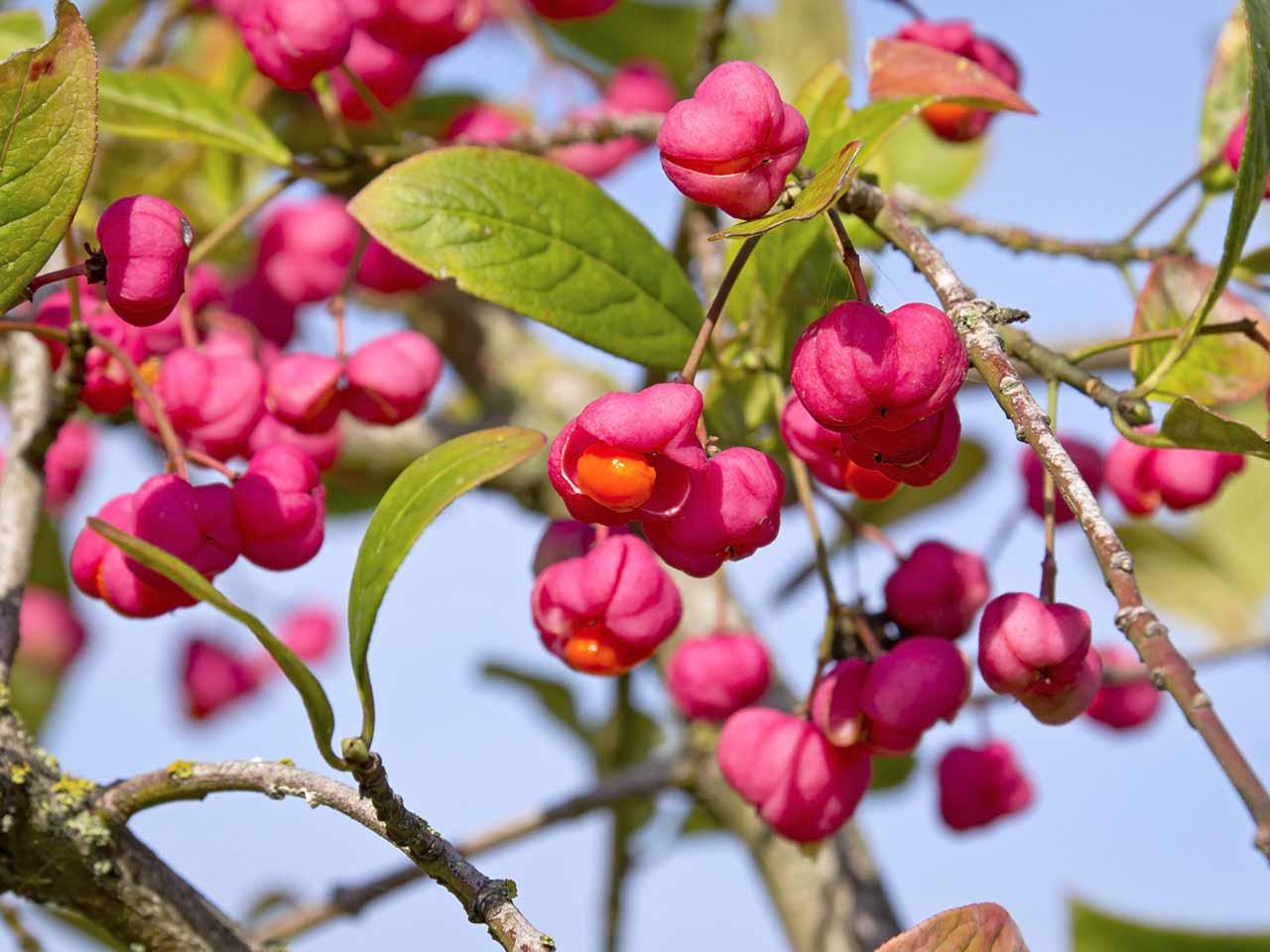 How To Grow Native Hedges Saga