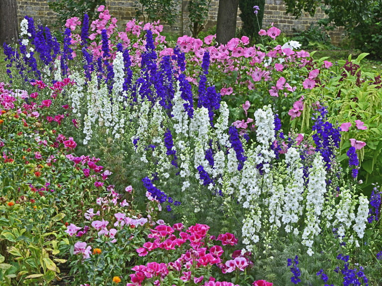 Delphiniums in a colourful border