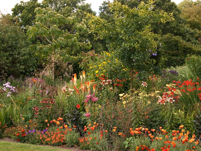 Red hot pokers in a summer border full of colour, including crocosmia, dahlias, and echinacea