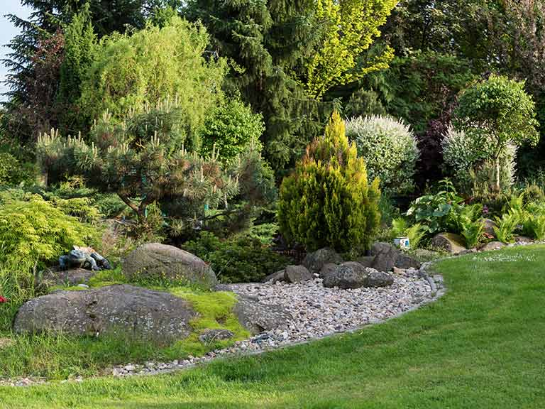 How to grow conifers saga for How to landscape a garden