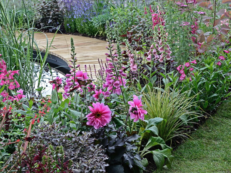 Foxgloves and dahlias in a garden border