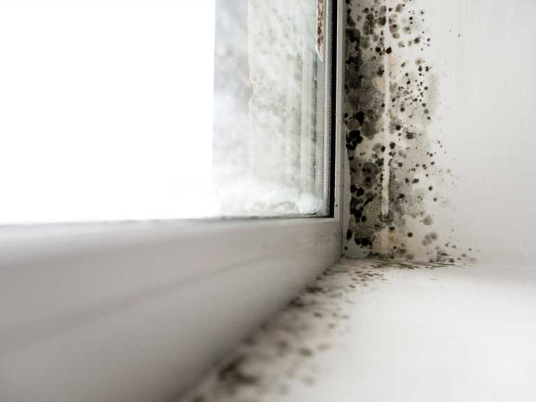 Mould around a windowsill