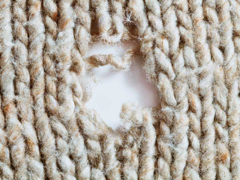 How To Get Rid Of Moth Holes In Clothes Roselawnlutheran