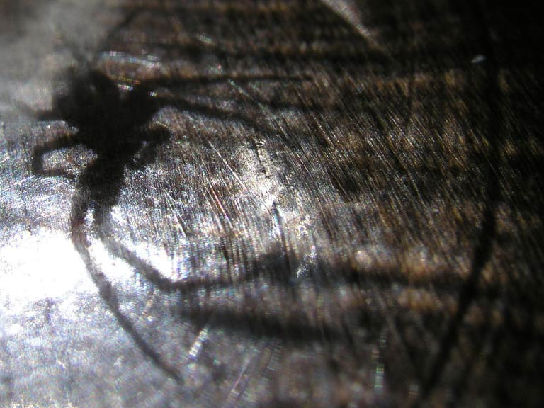 How to get rid of spiders deter them saga for How to get rid of spiders in the house uk