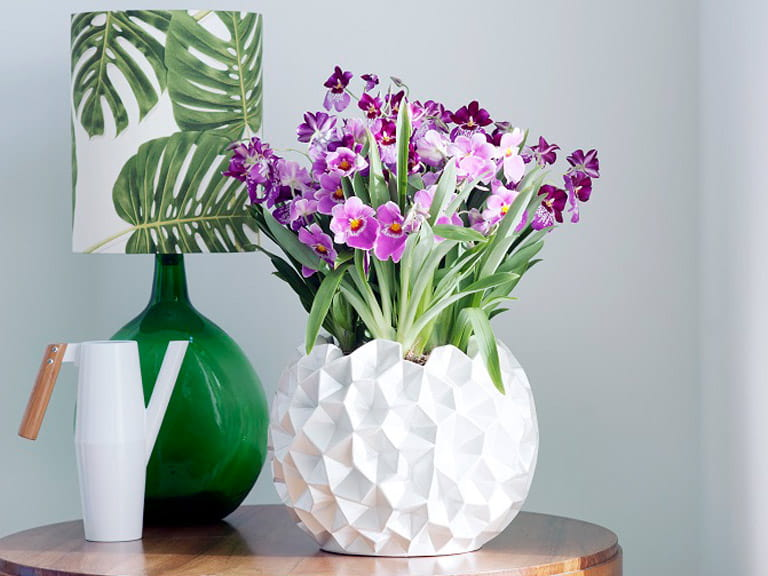 Orchids used in home decor