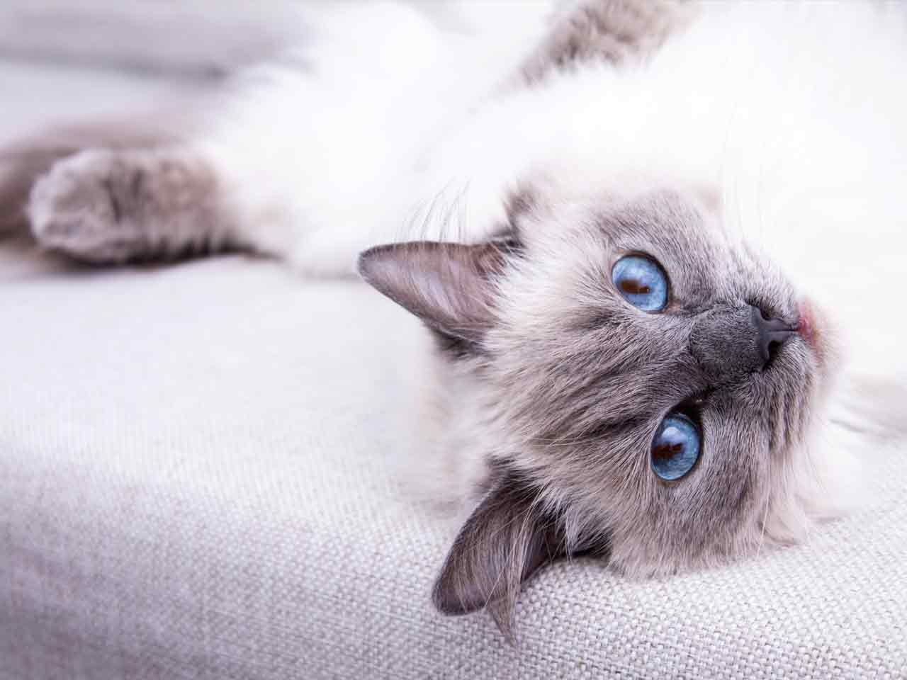 Choosing the right cat