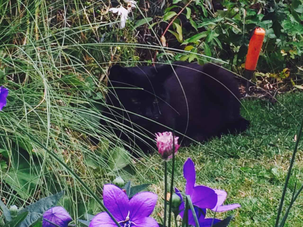 How a cat can change your life saga - Gardening for pets ...