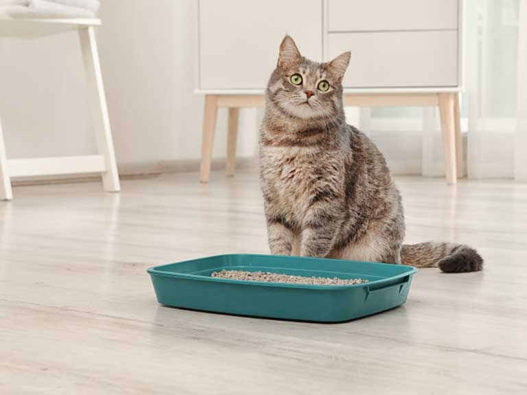 Cat and litter tray