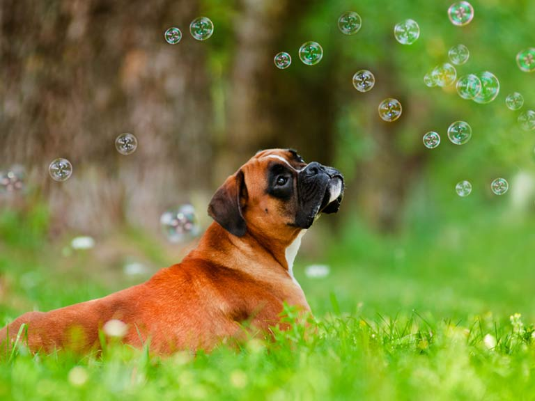 Dog with flavoured bubbles