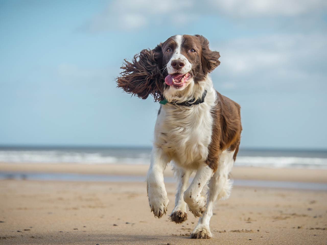Best UK dog walks