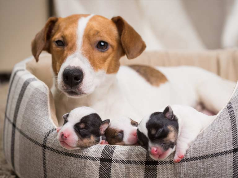 Mother with puppies